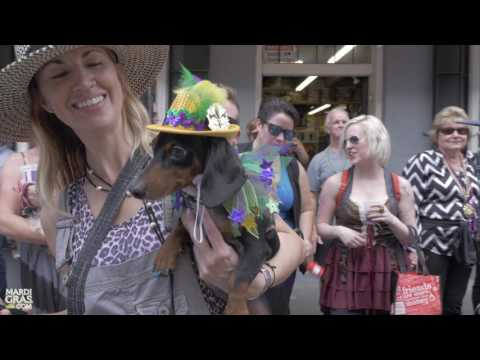 Watch adorable costumed dogs parade in Krewe of Barkus for Mardi Gras 2017
