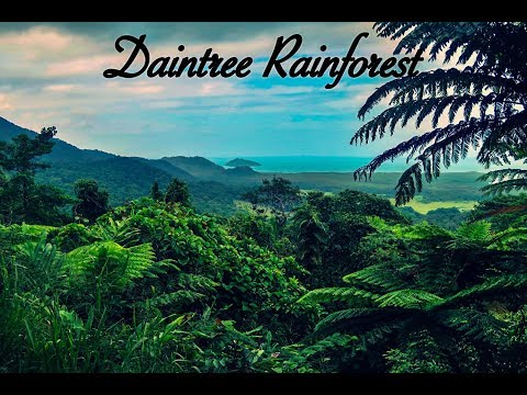 Van Life | The Daintree Rainforest Tour in Cairns, Australia.