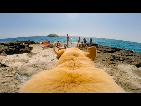 GoPro: It's Always Sunny In Walter's World