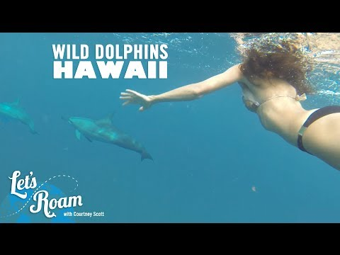 Things to do in Oahu - Swimming with Wild Dolphins