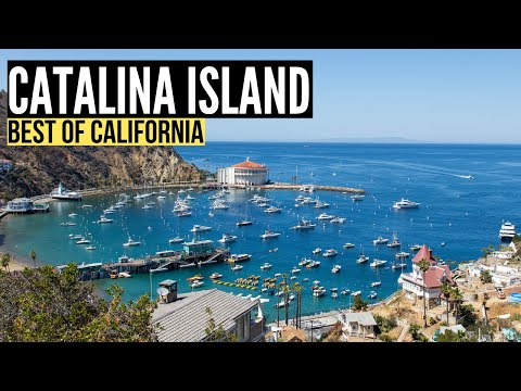 Things To Do in CATALINA ISLAND California (Travel Guide & Vlog)