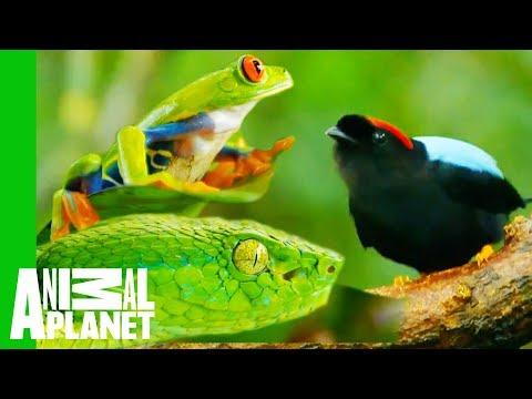 Impressive Creatures From The Costa Rican Jungle