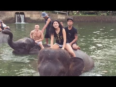 In Bali Breakfast & Bathe With The Elephants - Up Close & Personal!