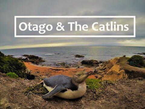 Otago Peninsula & The Catlins | New Zealand