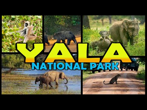 YALA NATIONAL PARK Safari - Sri Lanka (4K)