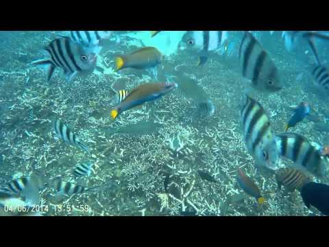 Tioman - Monkey Bay Snorkelling