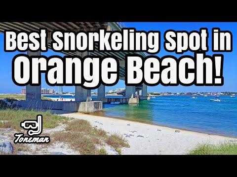 Best Snorkeling Spot in Orange Beach Alabama!