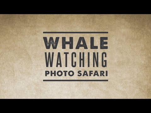 Whale Watching Tour in Banderas Bay | Vallarta Adventures