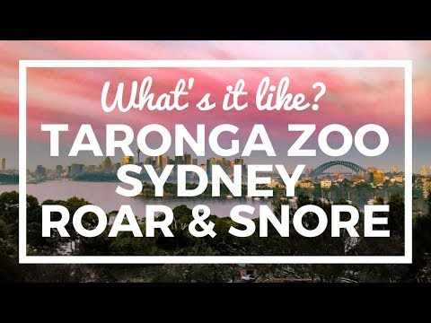 Sydney Taronga Zoo Sleepover - the Roar and Snore - what's it like?