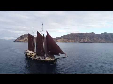 Cruising and Diving Komodo National Park - Adelaar - Exclusive Liveaboard Indonesia #1