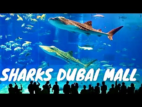 Sharks Dubai Aquarium Underwater Zoo | Dubai Mall