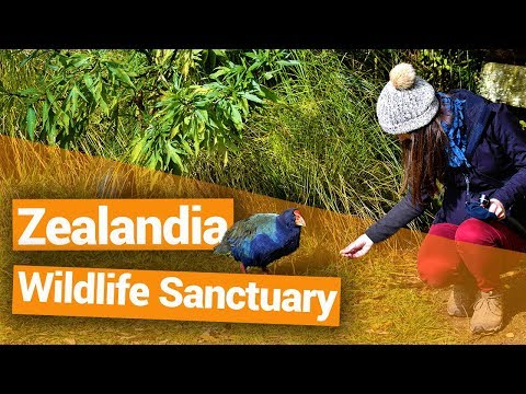 Zealandia Wildlife Sanctuary in Wellington - New Zealand's Biggest Gap Year – BackpackerGuide.NZ