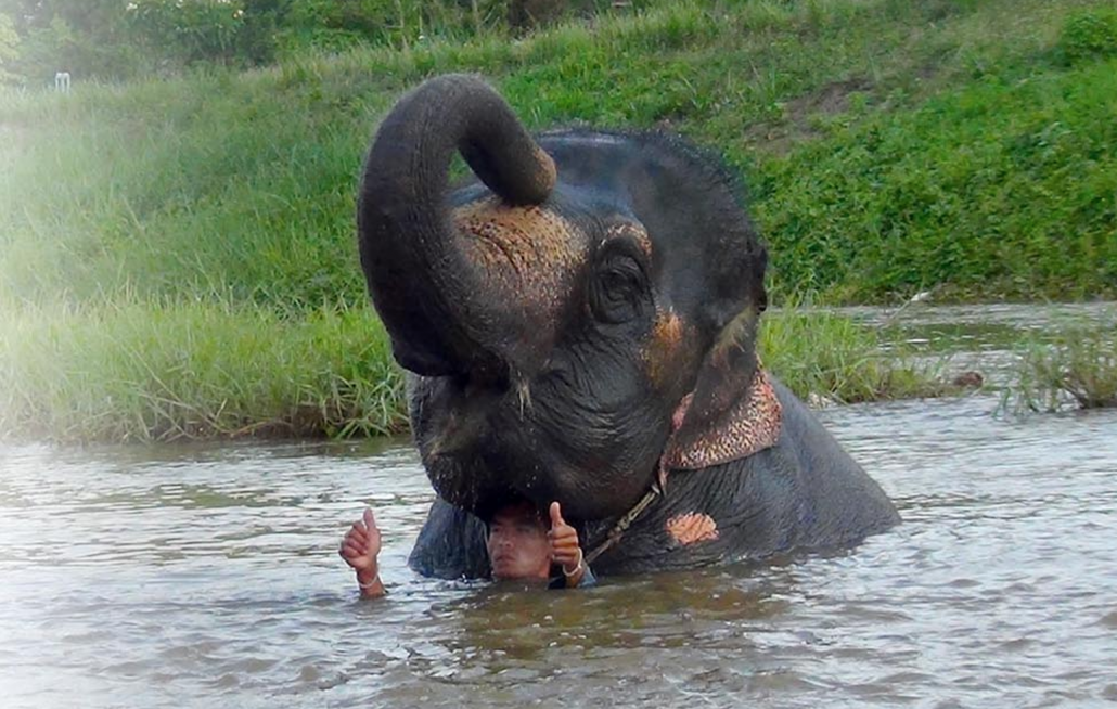 Thoms Elephant Camp - Best things. to do in Pai