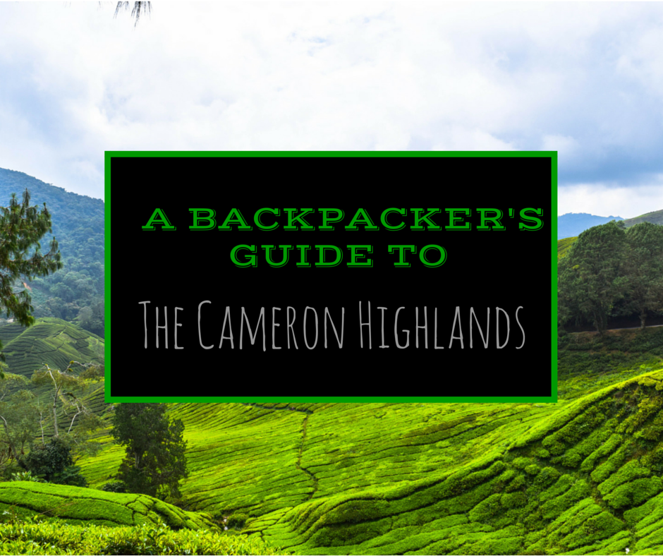A Backpackers Guide To The Cameron Highlands Malaysia