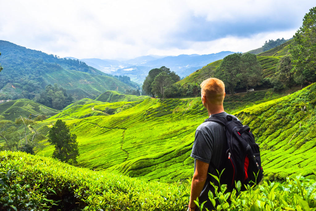 The Ultimate Backpacker S Guide To The Cameron Highlands