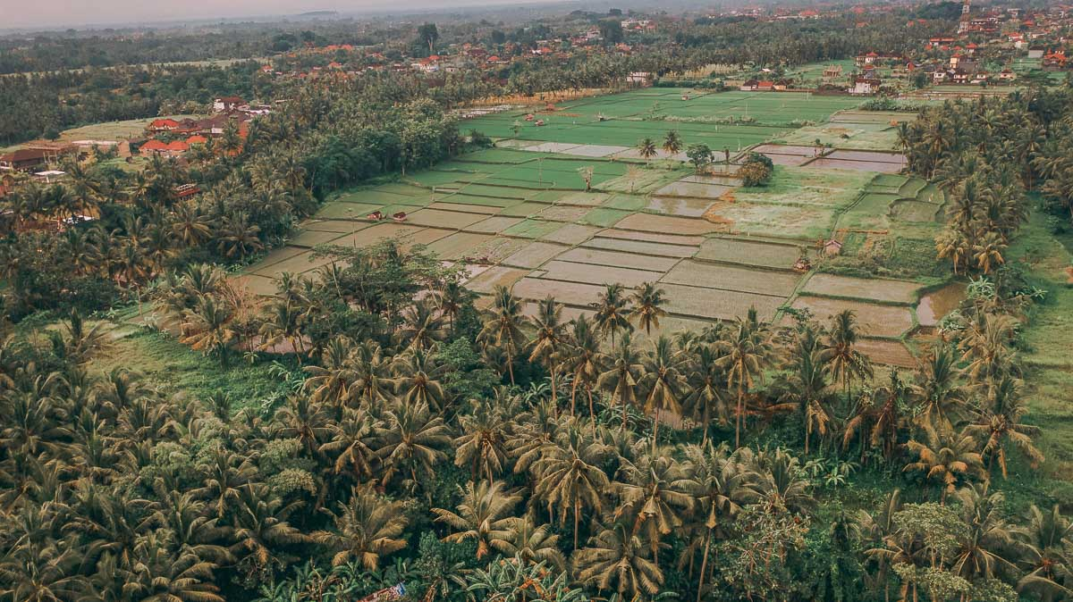 Ubud Itinerary - BEst Things To Do