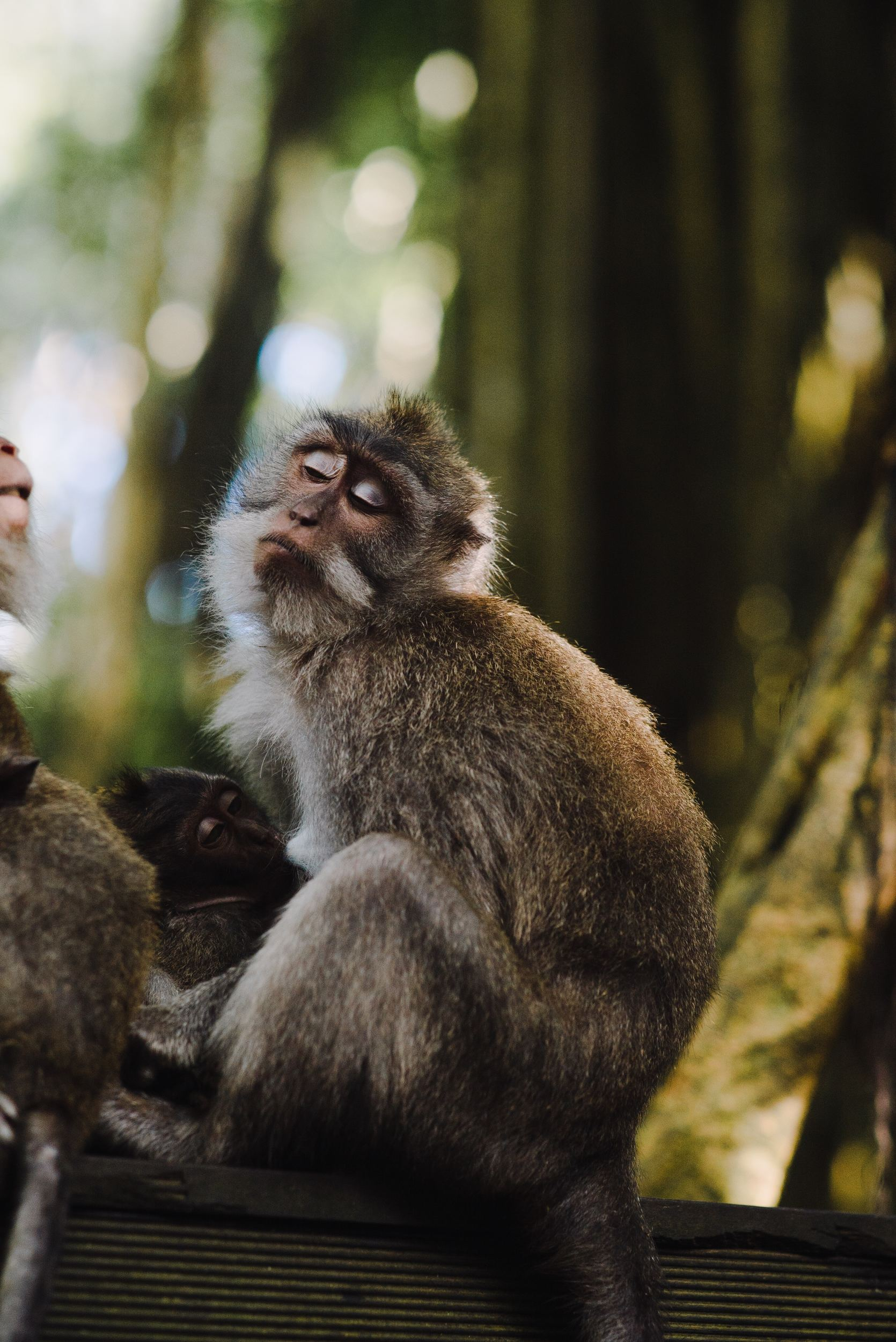 Ubud Monkey Foreest- Best Things To Do In Ubud
