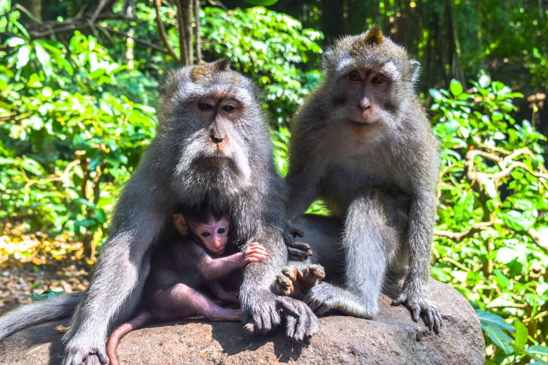 Ubud Sacred Monkey Forest - 3 Days in Ubud