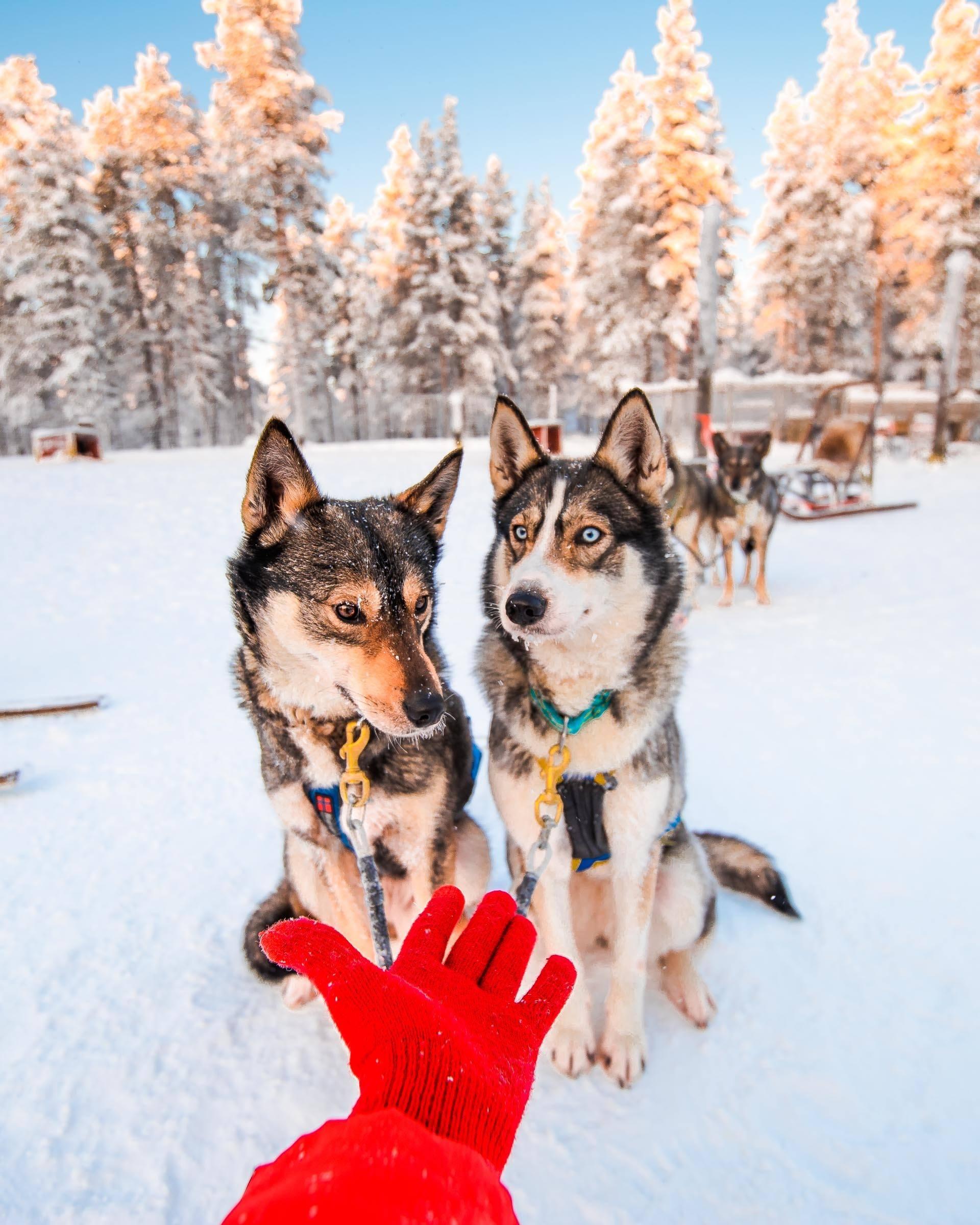 Husky Sledding Torassieppi, Lapland, Finland