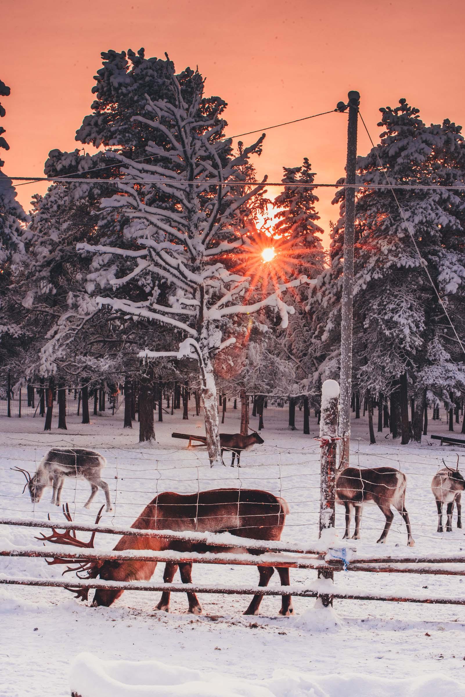 Lapland Reindeer Sleigh Ride