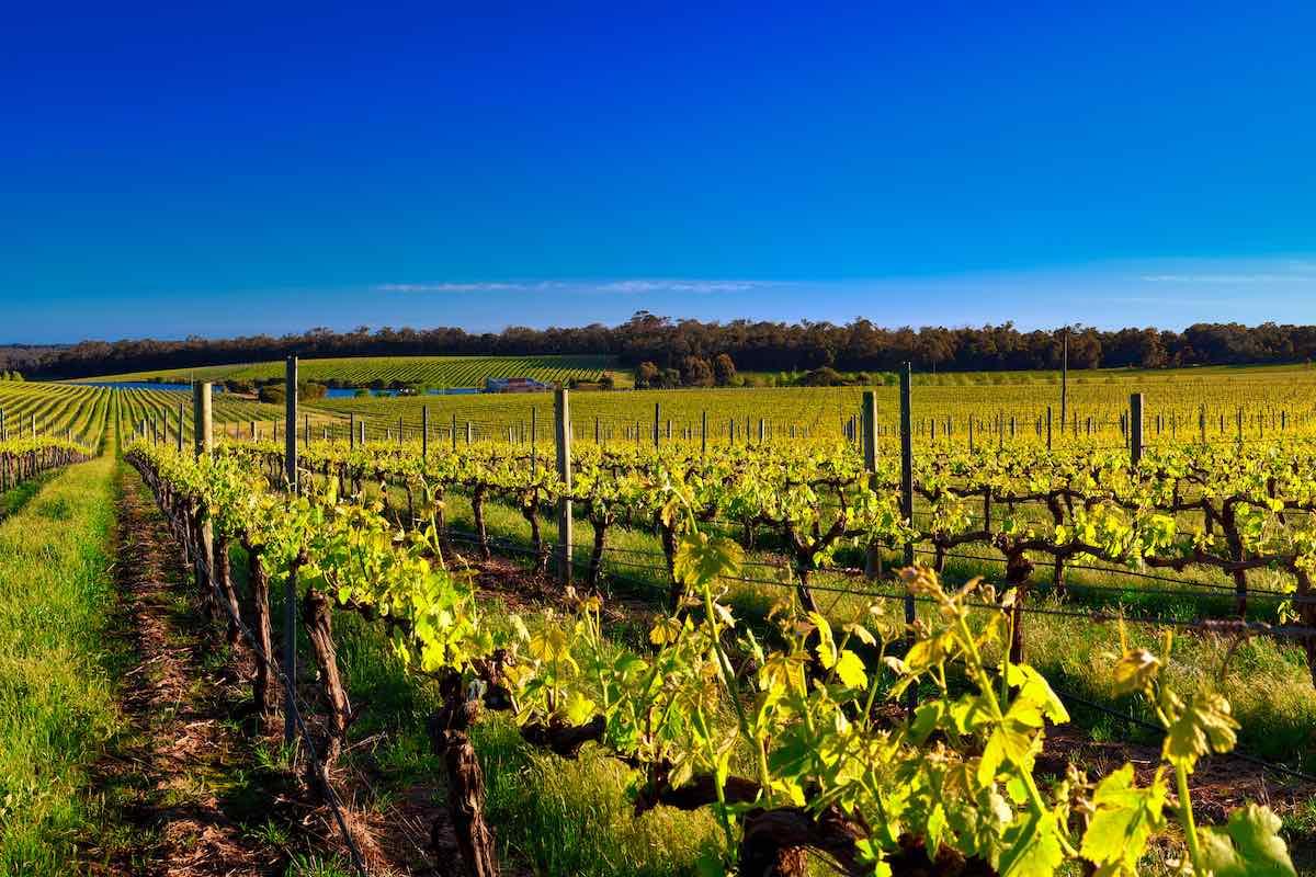 Perth Itinerary Wine Tasting