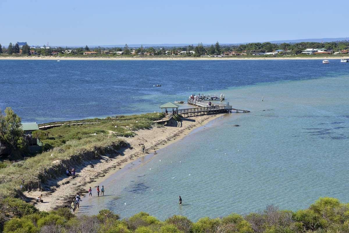 Penguin Island Perth itinerary