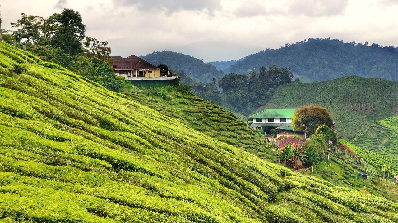 Cameron Highlands, Malaysia Itinerary