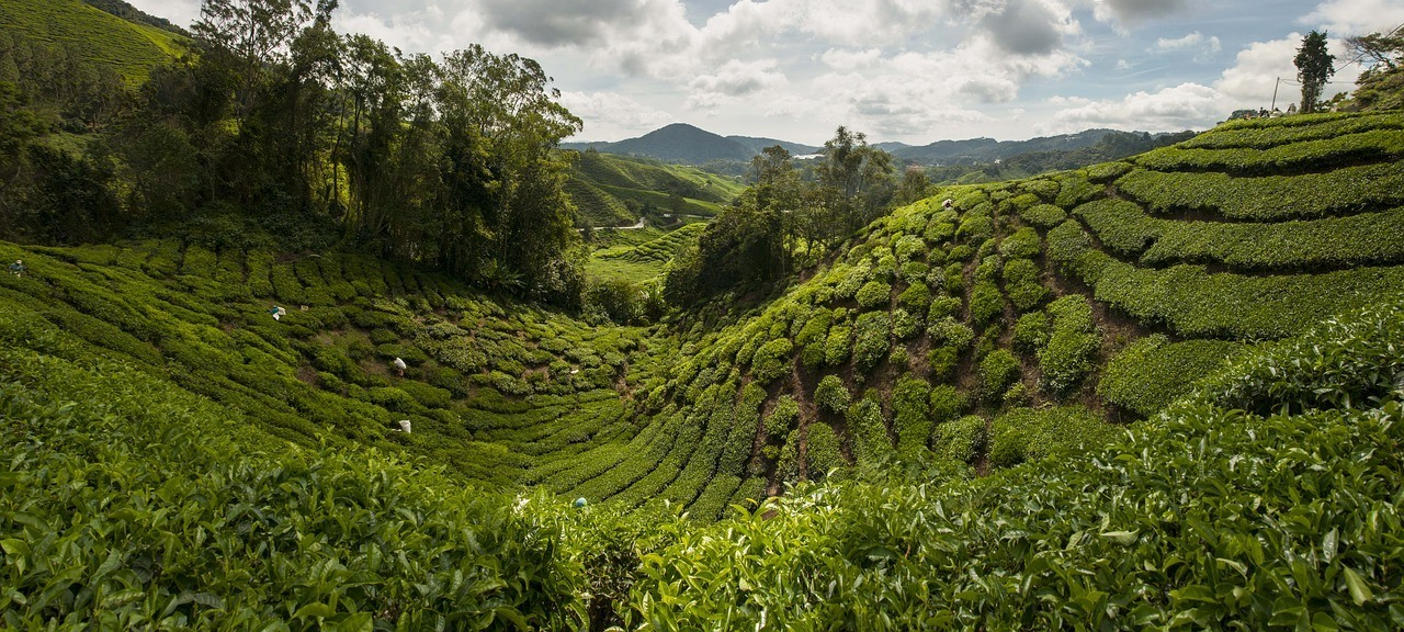 Cameron Highlands, Malaysia Itinerary Two Weeks