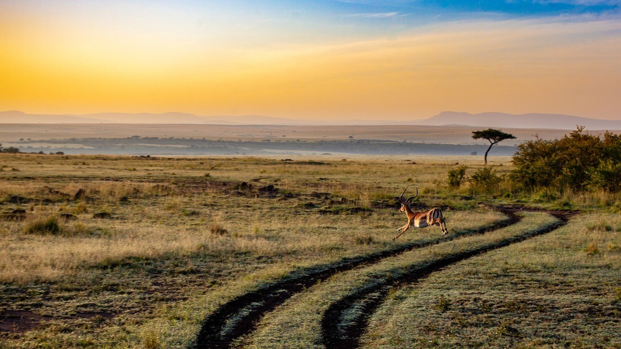 Kenya Safari - Best PlAces to visit in Africa