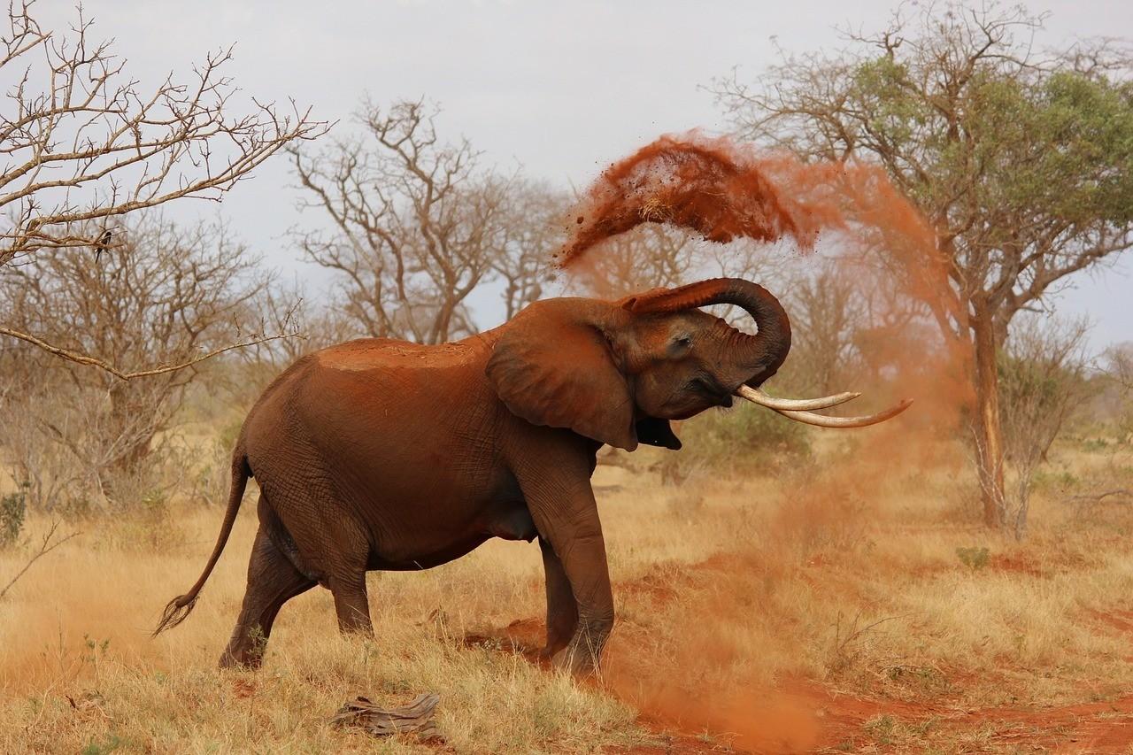 Kenya Safari - Safest Countires to Visit in Africa