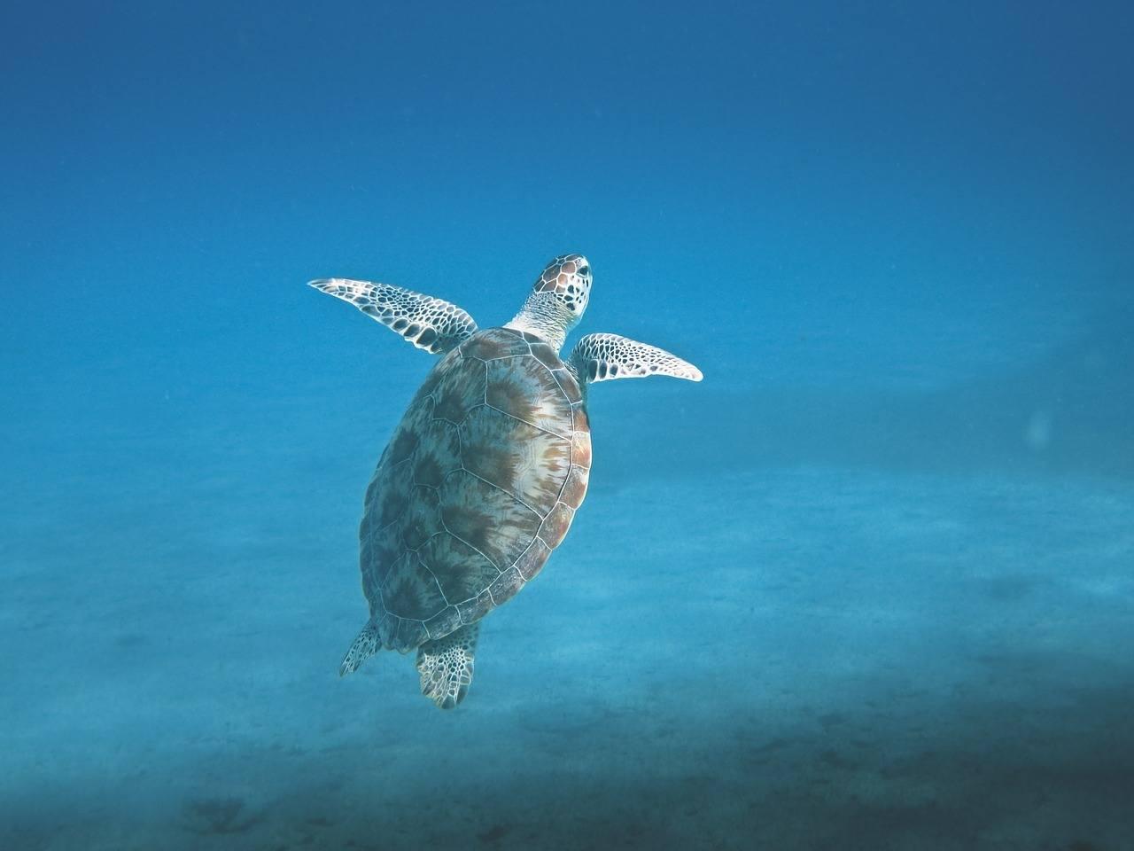 Nusa Islands - Bali Itinerary Snorkeling