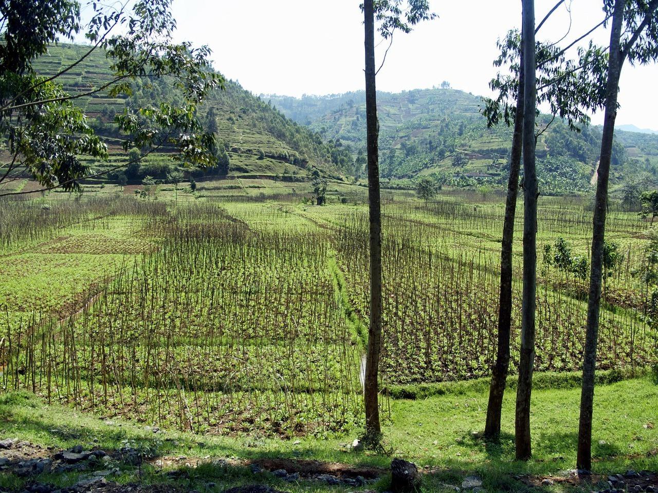 Rwanda Landscape - Safe African Countries
