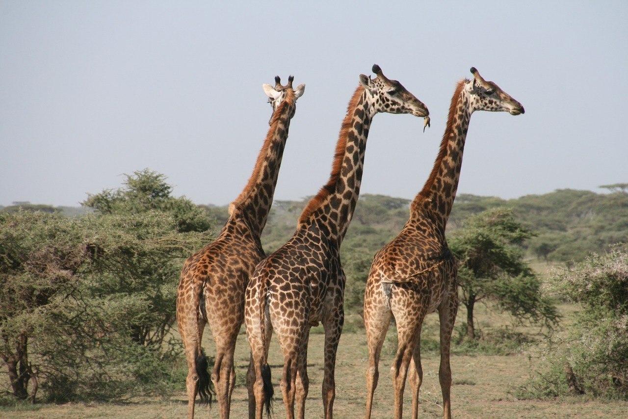 Tanzania Safari - Best Safe Countries in Africa