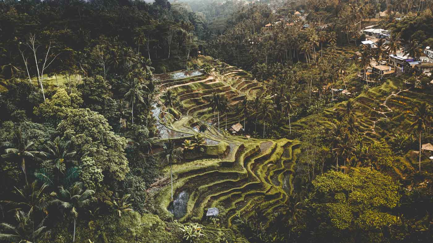 Ubud Rice Terraces - Bali Itinerary