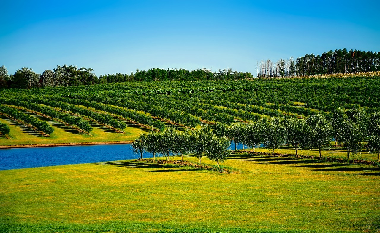 Uruguay Vineyard - Safest Countries in South America