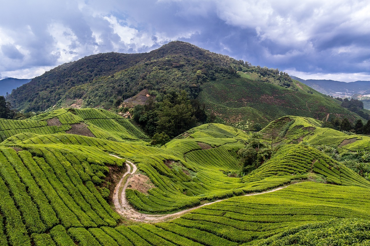 What to do in the Cameron Highlands - Malaysia Itinerary