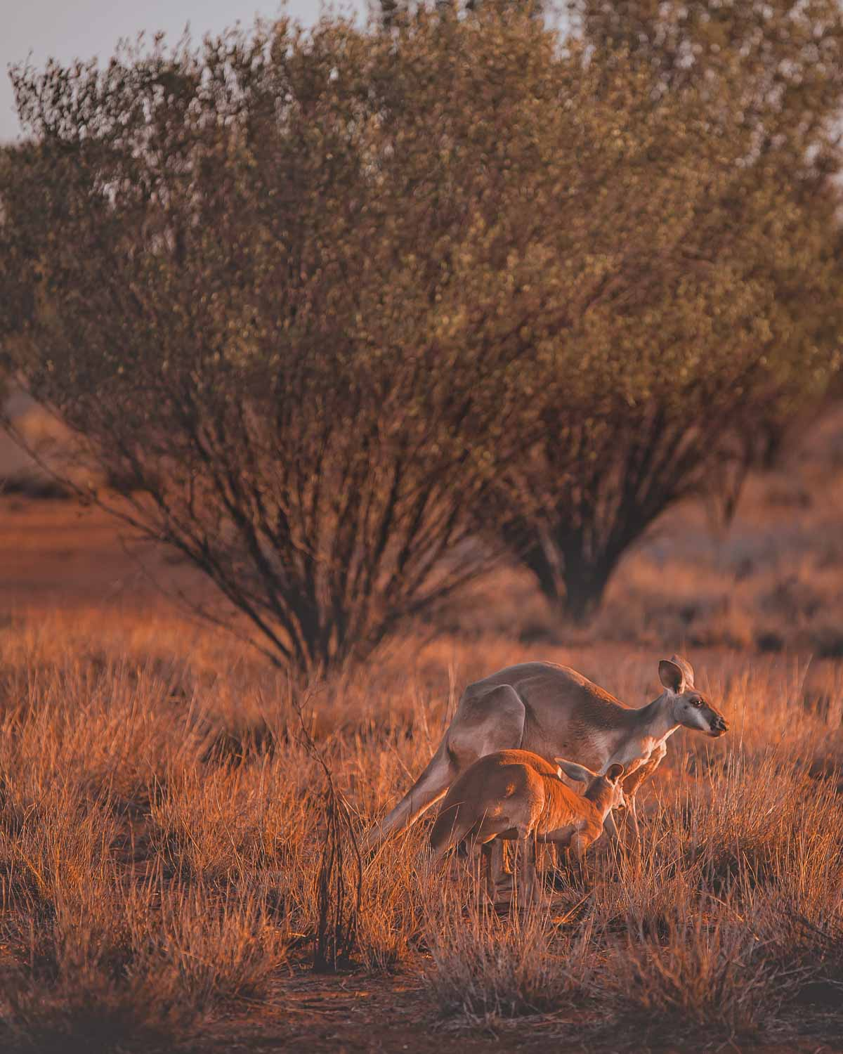 Australian outback Facts