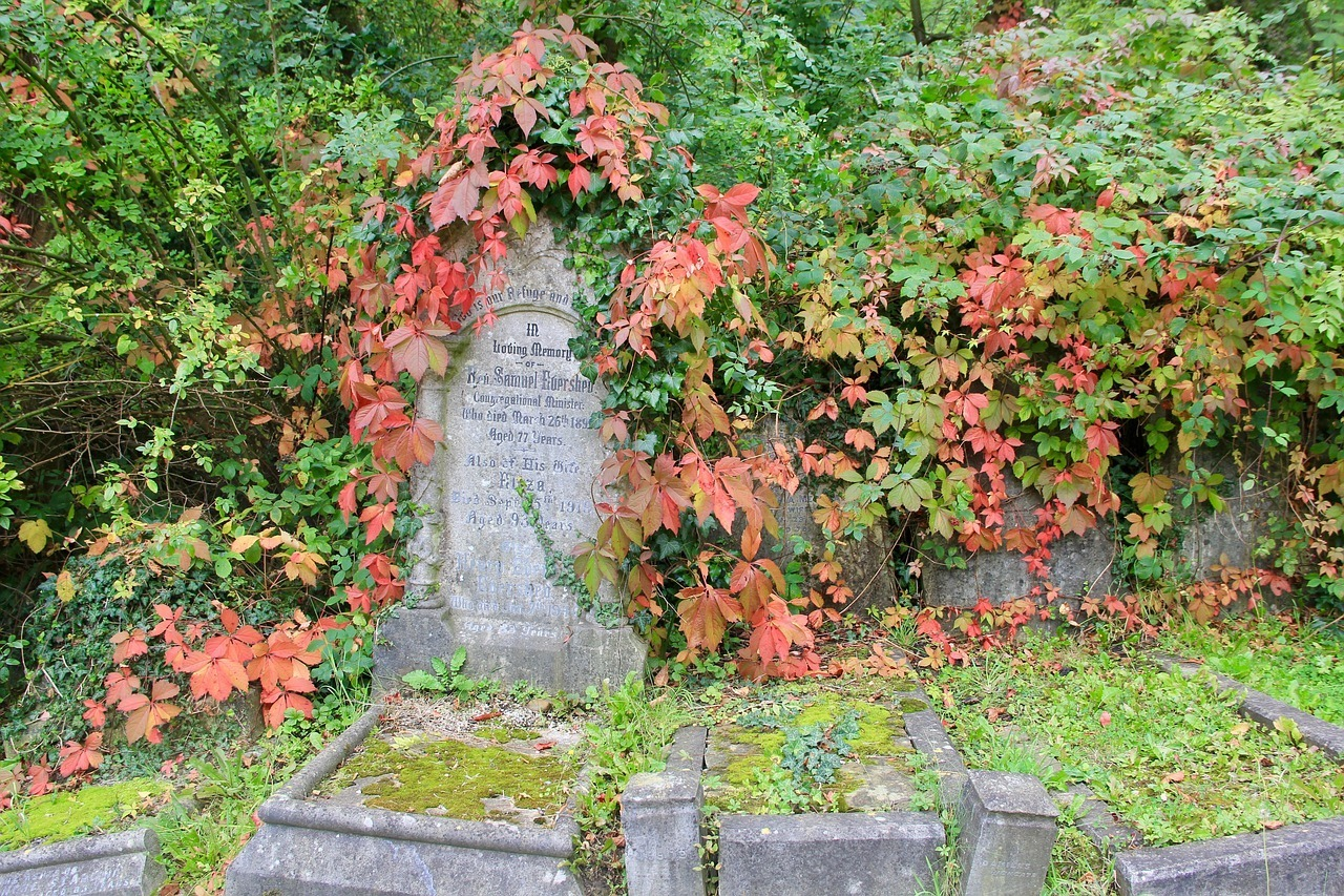 Highgate Cemetery - Unique Things to do in London