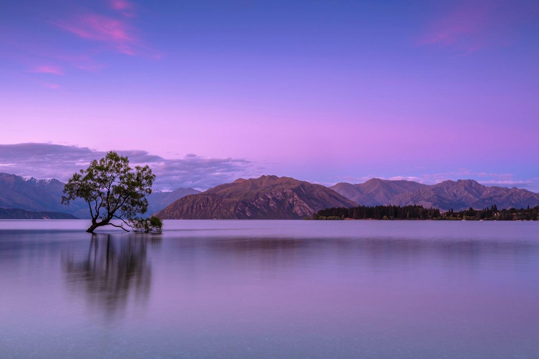 Wanaka Tree- South Island New Zealand Attractions