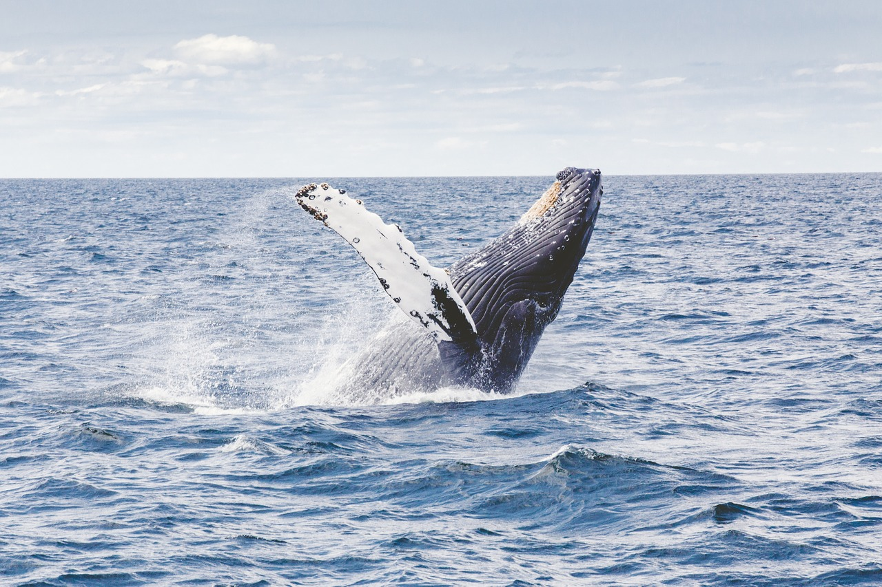 Whale Watching - Things To Do in Byron Bay