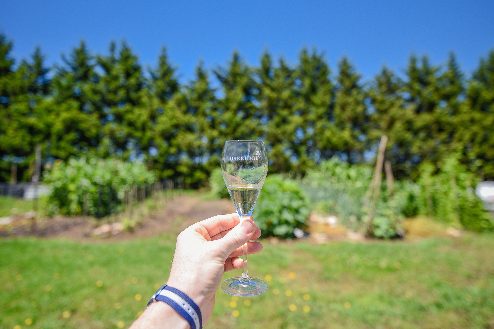 Yarra Valley Wine Tasting - Day Trips from Melbourne 2019