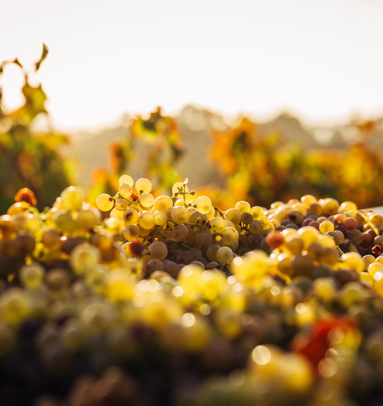 Barossa Valley - Day Trips from Adelaide