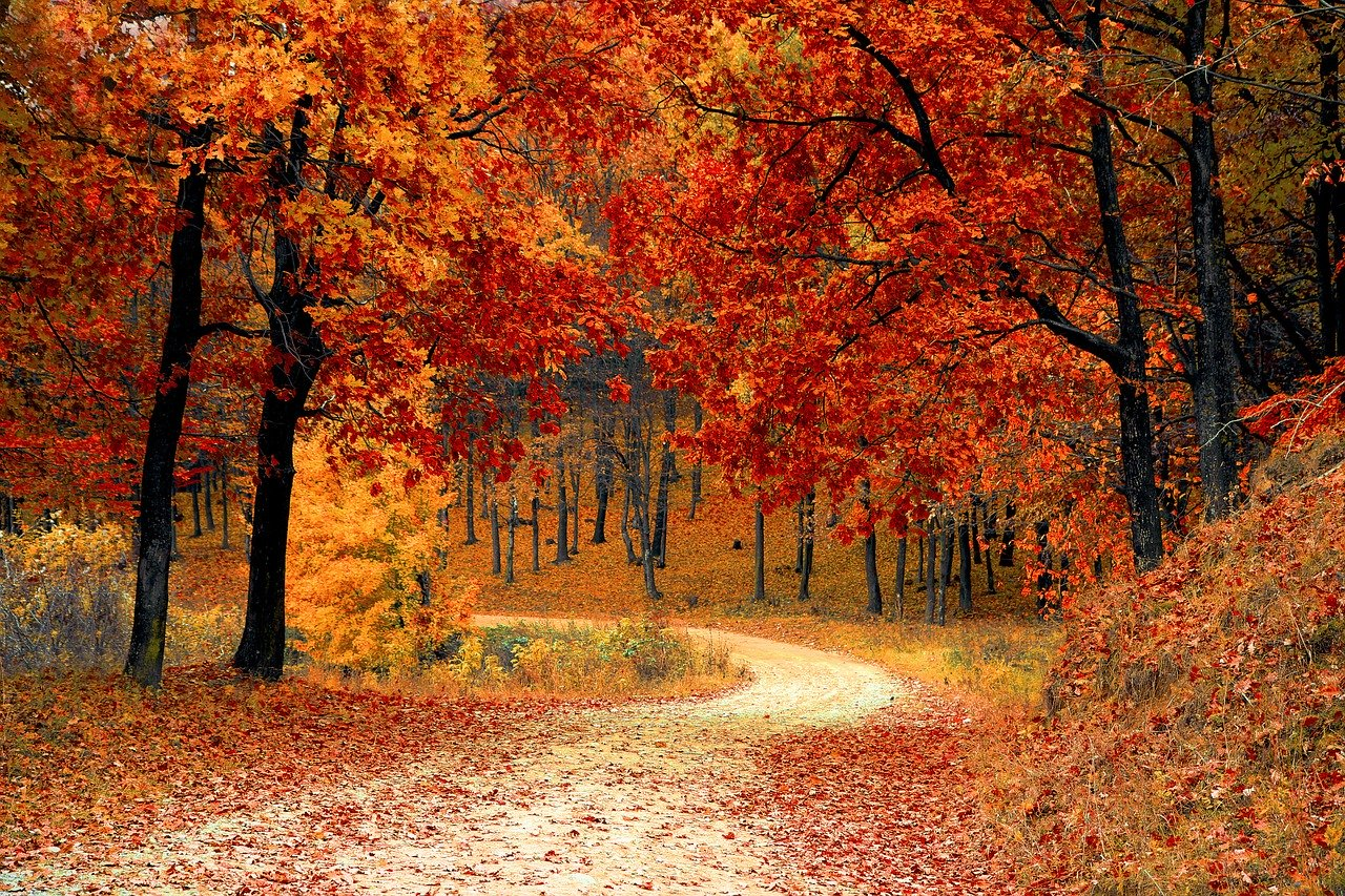 Fall Nature Quotes