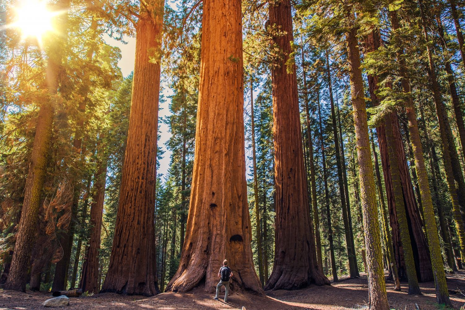 Yosemite National Park - Day Trips from San Francisco