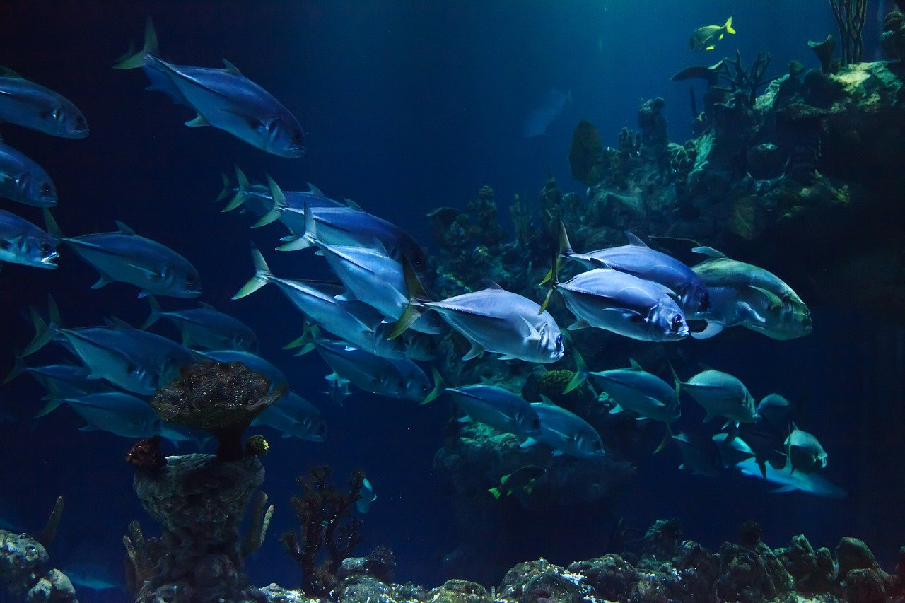 Aquaria KLCC - Best Things to do in Kuala lumpur with kids