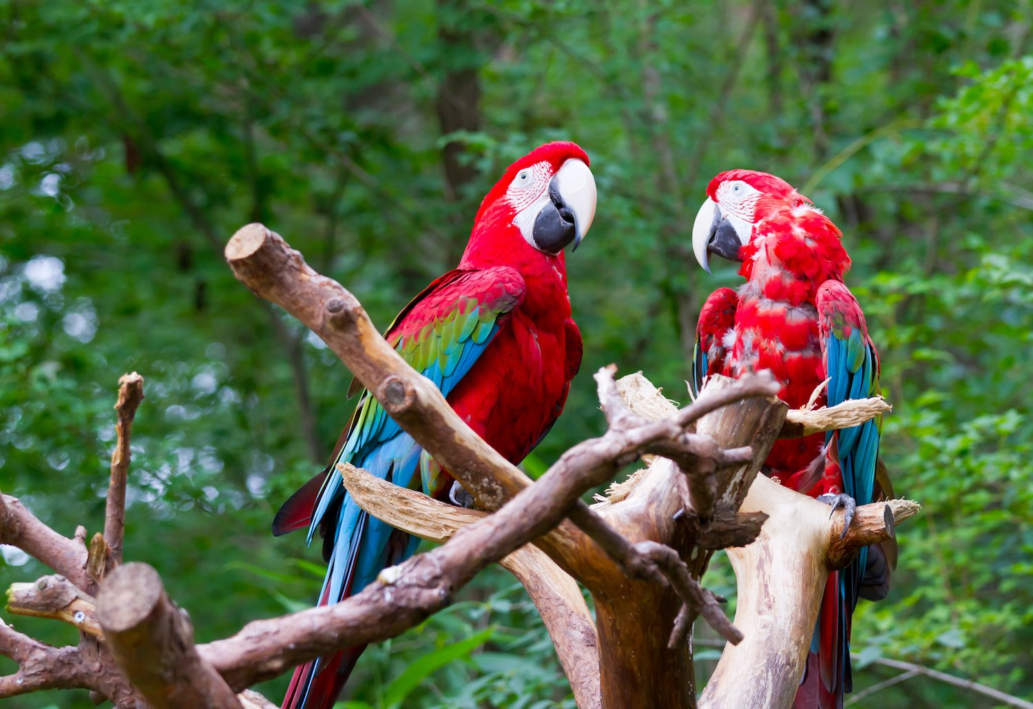 Facts about Costa Rica Wildlife