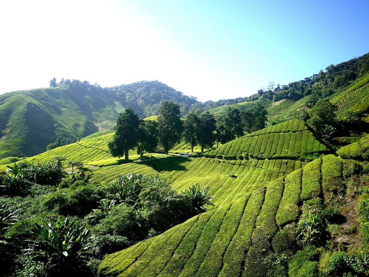 Cameron Highlands - Best Places to Visit in Malaysia in 3 Days