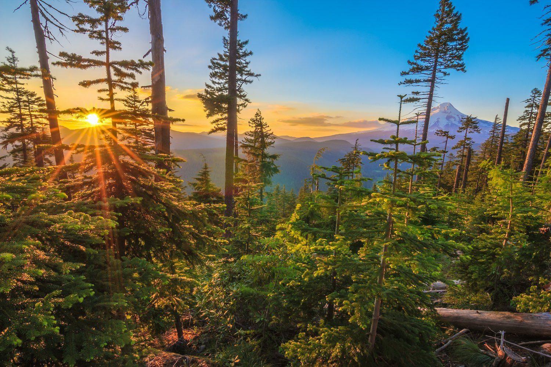 Cheap Airbnbs in Portland, Oregon