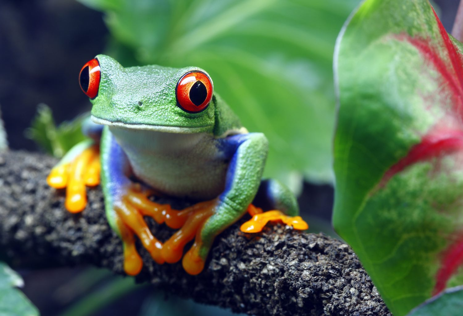 Interesting Costa Rica Facts for Kids