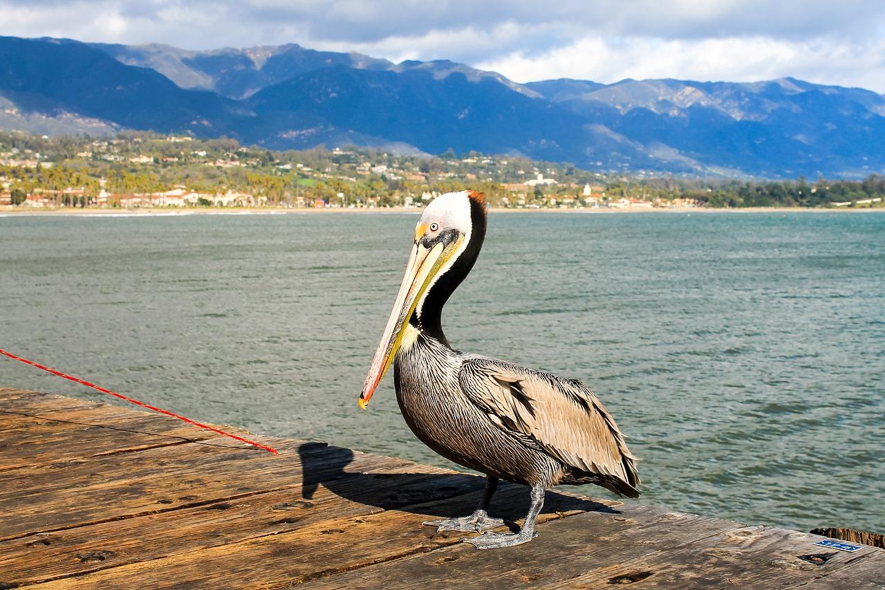 pelican - santa barbara airbnbs